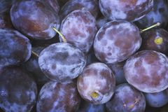 Ripe blue plums Stock Photo