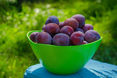 Ripe blue plums in green plate on a blue wooden bench Stock Image