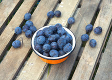 Ripe blue plums in metal orange bowl closeup Royalty Free Stock Photo
