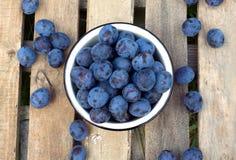Ripe blue plums in metal orange bowl closeup Stock Photos