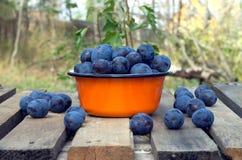 Ripe blue plums in metal orange bowl closeup Royalty Free Stock Photos
