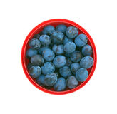 Ripe blue plums in red bucket isolated Royalty Free Stock Images