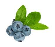 Ripe blueberries Royalty Free Stock Photo