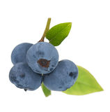 Ripe blueberries Stock Images