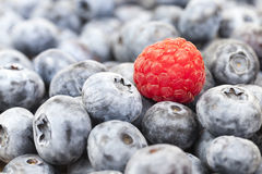 Ripe blueberries, close-up Royalty Free Stock Photo