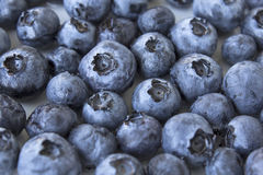 Ripe Blueberries, Closeup, Background Royalty Free Stock Images