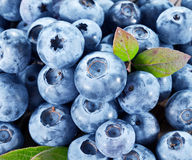 Ripe blueberries - food background. Stock Image