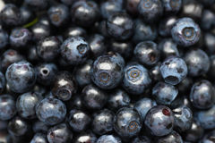 Ripe blueberries. Ripe fresh, juicy blueberries, natural antioxidant stock photo
