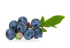 Ripe blueberries Stock Photo