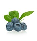 Ripe blueberries Royalty Free Stock Photography