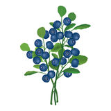 Ripe blueberries with leaves. Vector illustration. Stock Photo