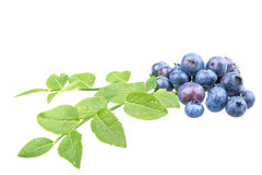 Ripe blueberries and leaves on white background Royalty Free Stock Photo