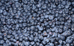Ripe blueberries in the market Royalty Free Stock Image