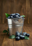 Ripe blueberries in a metal bucket Stock Images