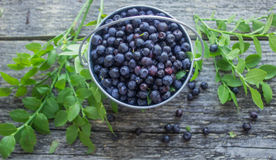 Ripe blueberries Stock Photos