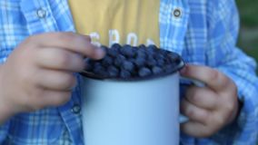 Ripe blueberries in a metal mug. the summer harvest of berries. space for text.  stock video footage
