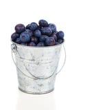Ripe blueberries in metallic bucket Stock Images