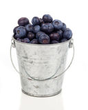Ripe blueberries in metallic bucket Royalty Free Stock Photos