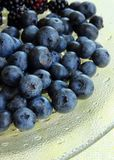 Ripe blueberries on a plate Stock Images