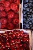 Ripe blueberries raspberries red currants Stock Photo