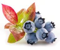 Ripe blueberries. Royalty Free Stock Photos