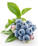Ripe blueberries. Stock Images