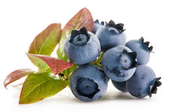 Ripe blueberries. Stock Photography