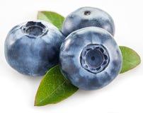 Ripe blueberries. Royalty Free Stock Photo