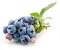 Ripe blueberries. Royalty Free Stock Photography