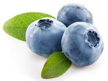 Ripe blueberries. Stock Image