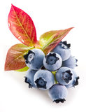 Ripe blueberries. Royalty Free Stock Images