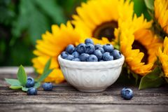 Ripe blueberries in white bowl with sunflower bouquet on wooden table, summer theme royalty free stock image