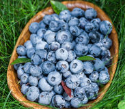 Ripe blueberries in the wooden bowl. Stock Image