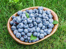 Ripe blueberries in the wooden bowl. Stock Photography