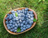 Ripe blueberries in the wooden bowl. Royalty Free Stock Photography