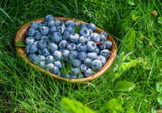 Ripe blueberries in the wooden bowl. Royalty Free Stock Photos