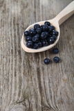 Ripe blueberries Royalty Free Stock Images