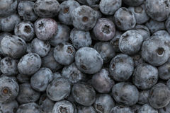 Ripe blueberry. Background Royalty Free Stock Photography