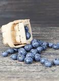 ripe blueberry berries royalty free stock photos