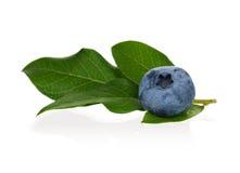 Ripe blueberry. Fresh ripe blueberriy with leaves on white background Royalty Free Stock Photos
