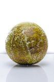Ripe breadfruit white backdrop  Stock Photos
