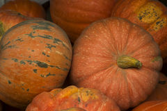 Ripe bright pumpkin lie on the ground after harvest. Royalty Free Stock Photos