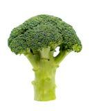 Ripe Broccoli Cabbage Isolated on White Background Stock Photos