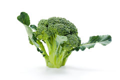 Ripe broccoli crop Royalty Free Stock Images