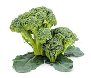 Ripe broccoli crops on leaves Royalty Free Stock Photos