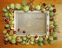 Autumn chestnut and golden frame royalty free stock image