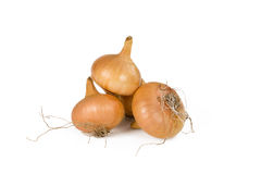 Ripe bulbs of onion on the white background. Stock Photos