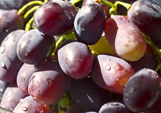 Ripe bunch of grapes in a transparent bowl closeup Royalty Free Stock Photo