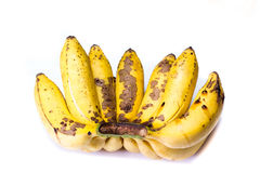 Ripe bunch of little bananas Royalty Free Stock Photo