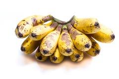 Ripe bunch of little bananas Stock Image